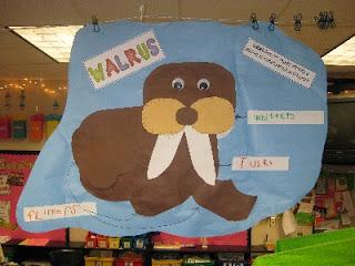 Walruses Day 1