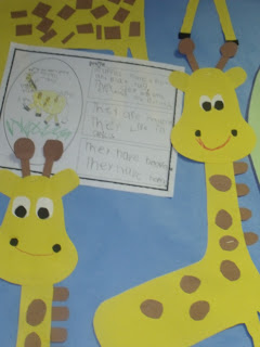 Zoo unit   Day 1 Giraffes