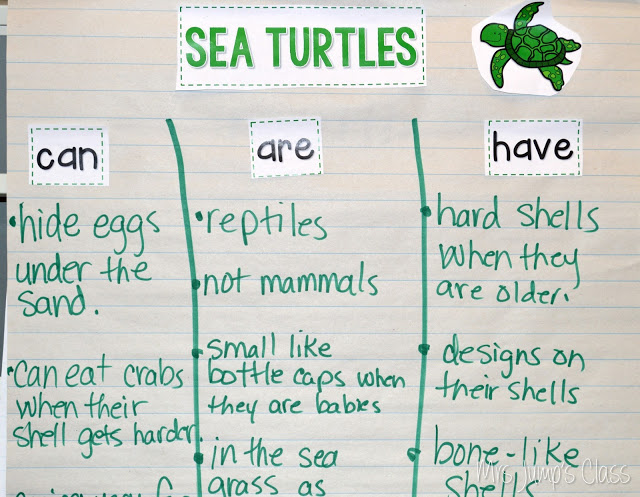 One Tiny Turtle Lesson Plans