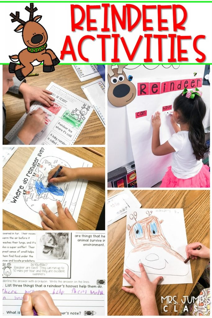 Kindergarten and first grade students will love learning about reindeer with these engaging reindeer activities. Informational texts, response to reading, directed drawing, and more! #reindeeractivities #decemberlessonideas